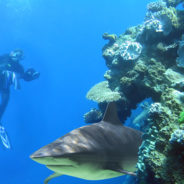 How to Scuba Dive With Sharks (& Not Get Eaten)