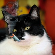 Smoking Catnip for Dummies: Everything You Need (or Wanted) to Know About Meowijuana